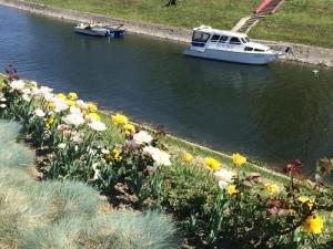 cvijeće-Vukovar